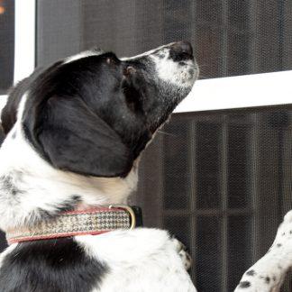 PetScreen<sup>®</sup> – telas resistentes a animais de estimação